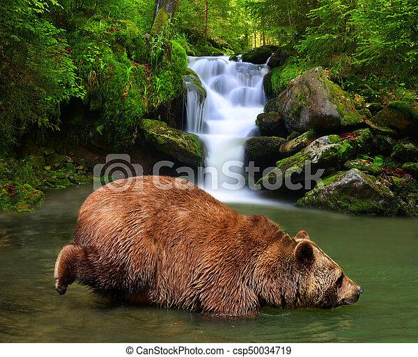 Brown Bear (Ursus arctos) - csp50034719