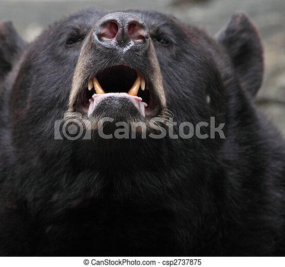 Brown bear (Ursus arctos) - csp2737875