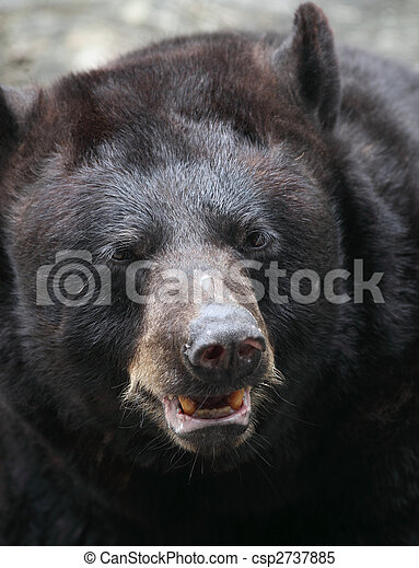 Brown bear (Ursus arctos) - csp2737885