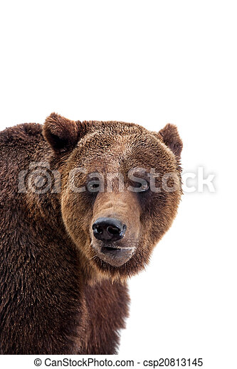 Brown bear, Ursus arctos - csp20813145