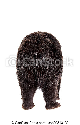 Brown bear, Ursus arctos - csp20813133