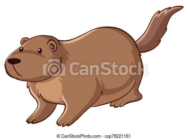 Brown beaver on white background - csp78221161