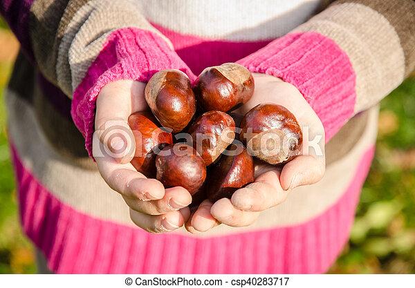 brown chestnut fruit - csp40283717