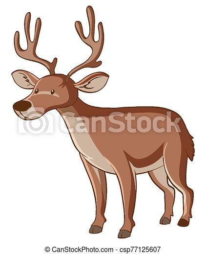 Brown deer on white background - csp77125607
