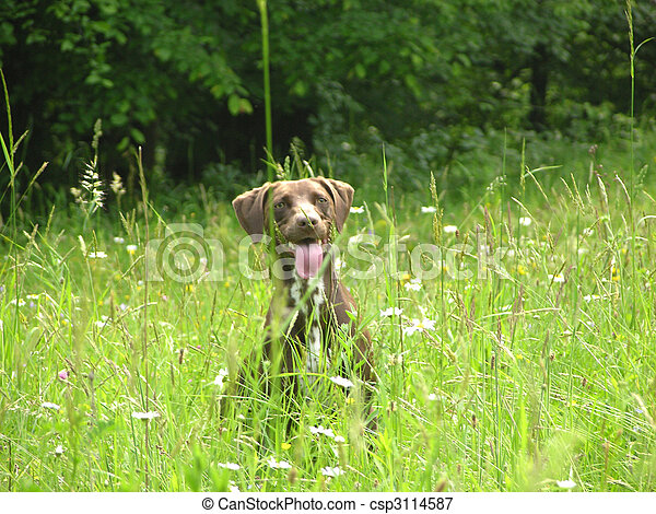 Brown dog nearly hidden in the open countryside - csp3114587