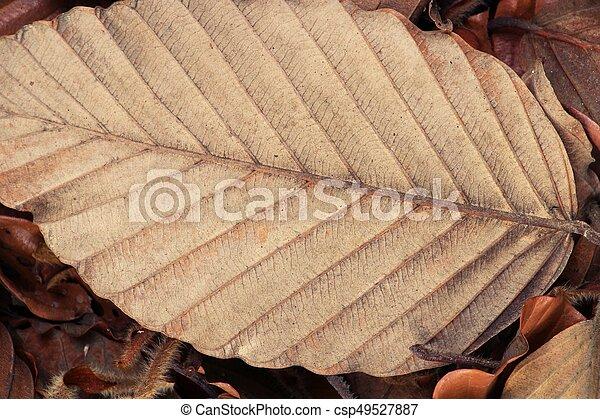 Brown dry leaves on the floor - csp49527887
