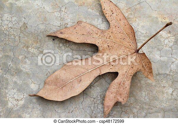 Brown dry leaves on the floor - csp48172599