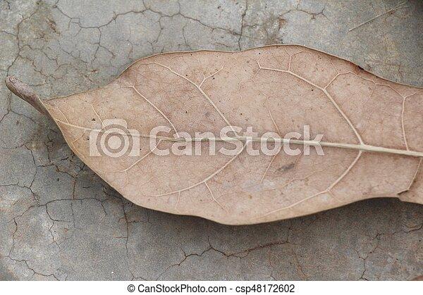 Brown dry leaves on the floor - csp48172602