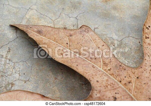 Brown dry leaves on the floor - csp48172604