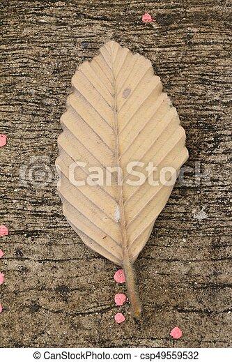 Brown dry leaves on the floor - csp49559532