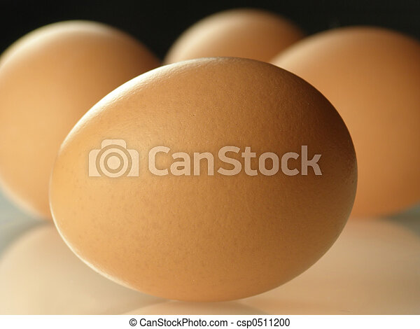 brown eggs - csp0511200