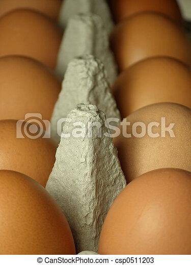 brown eggs - csp0511203