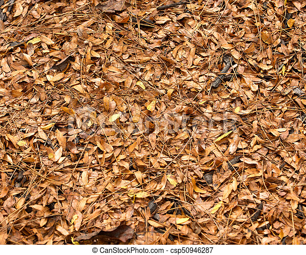 Brown fall's leaves like - csp50946287
