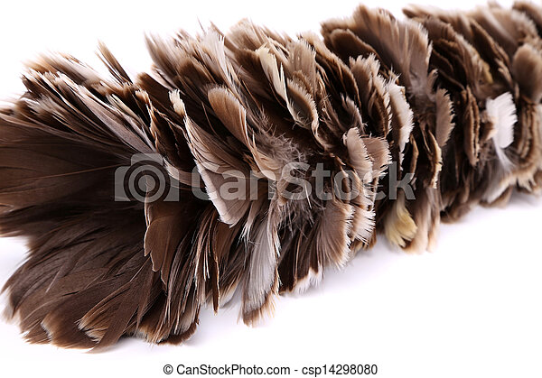 Brown feather duster - csp14298080
