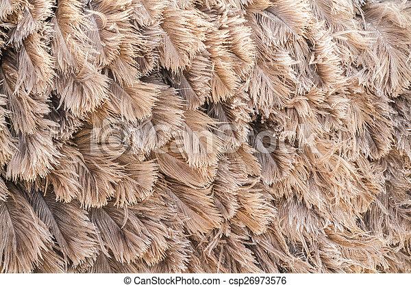 Brown feather ostrich - csp26973576