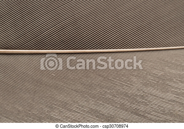 Brown Feather - csp30708974