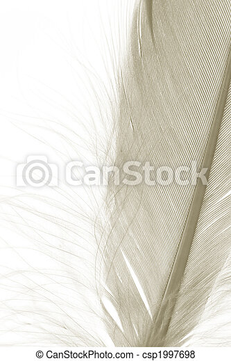 Brown Feather - csp1997698