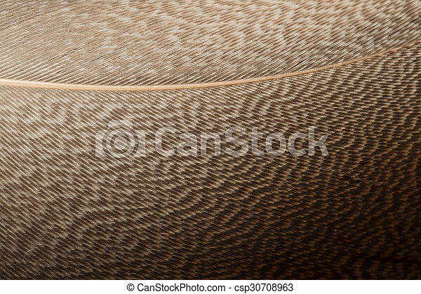 Brown Feather - csp30708963