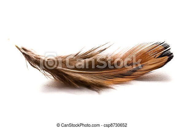 brown feather - csp8730652