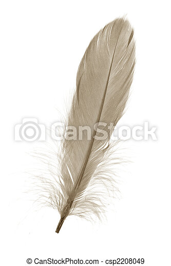 Brown Feather - csp2208049