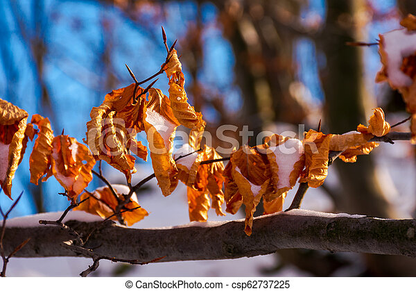 brown foliage on the branch in winter - csp62737225