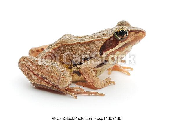 Brown frog - csp14389436