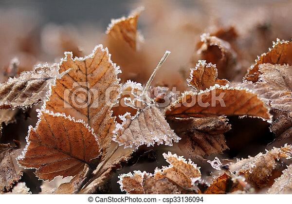 Brown Frozen leaves - csp33136094
