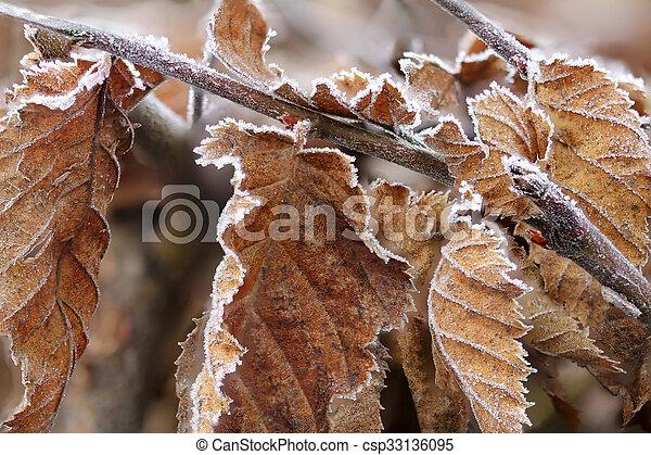 Brown Frozen leaves - csp33136095