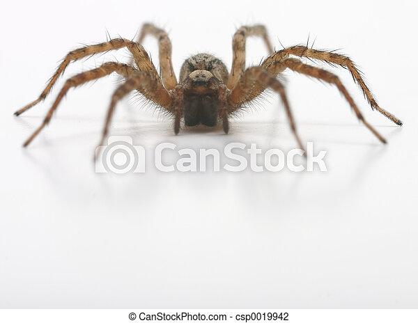 Brown hairy spider - csp0019942