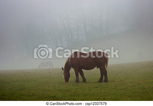 Brown horse in a fog - csp12337579