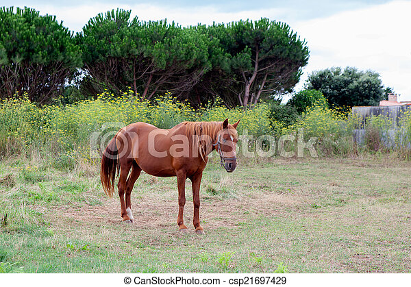 Brown Horse in a meadow - csp21697429