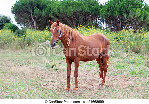 Brown Horse in a meadow - csp21668699