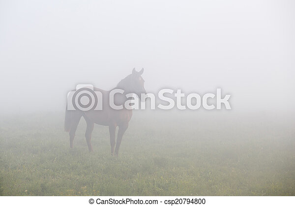 Brown horse standing in morning fog - csp20794800