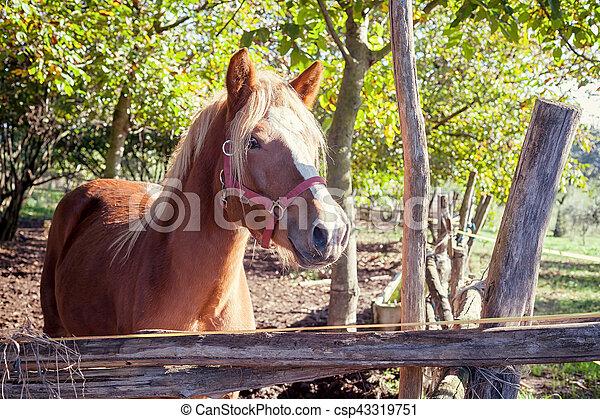 brown horse standing - csp43319751