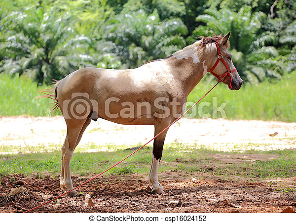 brown horse stands in a meadow - csp16024152