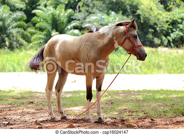 brown horse stands in a meadow - csp16024147