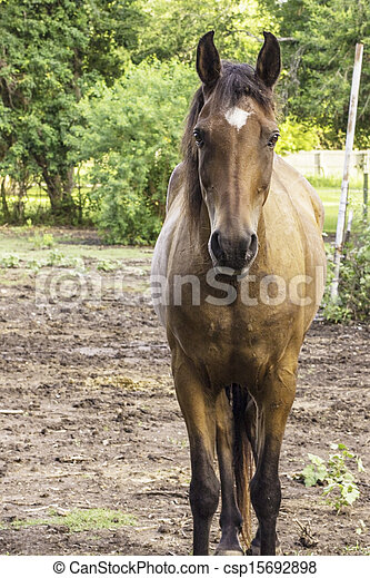 A front view of a large brown horse with a white spot on his brown horse csp15692898 sciox Choice Image