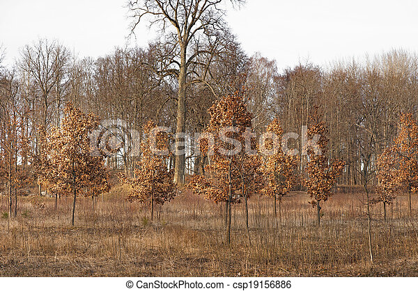 Brown landscape - csp19156886