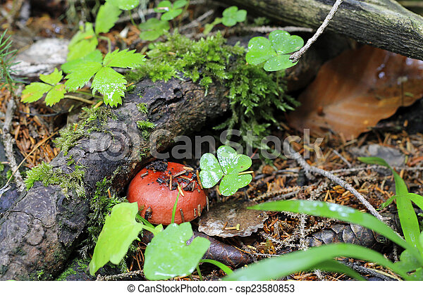 Brown mushroom growing in the autumn forest - csp23580853