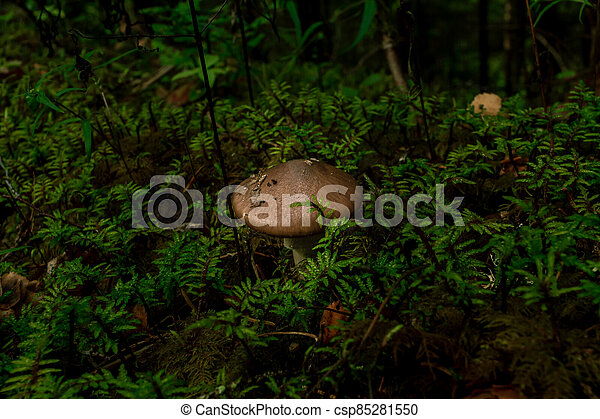 Brown mushrooms growing in a green rain forest - csp85281550