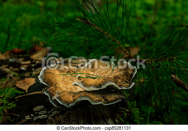 Brown mushrooms growing in a green rain forest - csp85281131