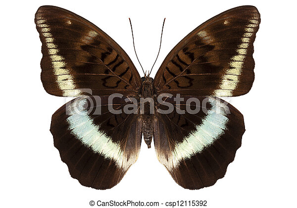 brown Nymphalidae butterfly - csp12115392