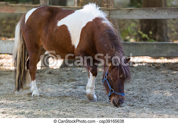 Brown pony stands quietly in a corral on the farm - csp39165638