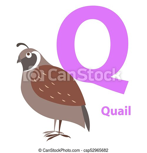 brown quail on alphabet card with letter q flat brown quail on