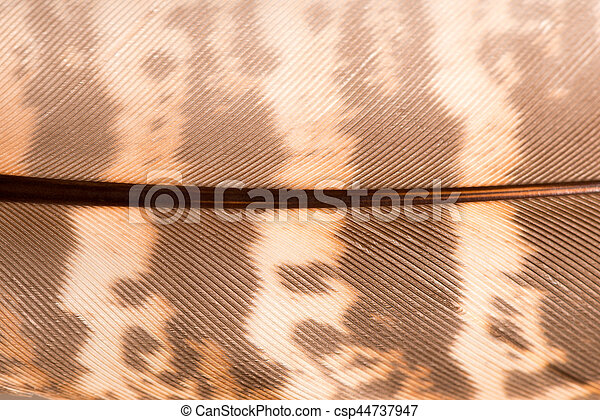 Brown Quill Pattern Macro for Backgrounds - csp44737947