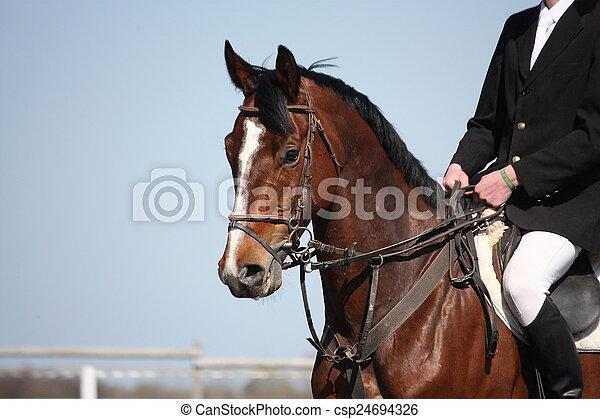 Brown sport horse portrait during s - csp24694326