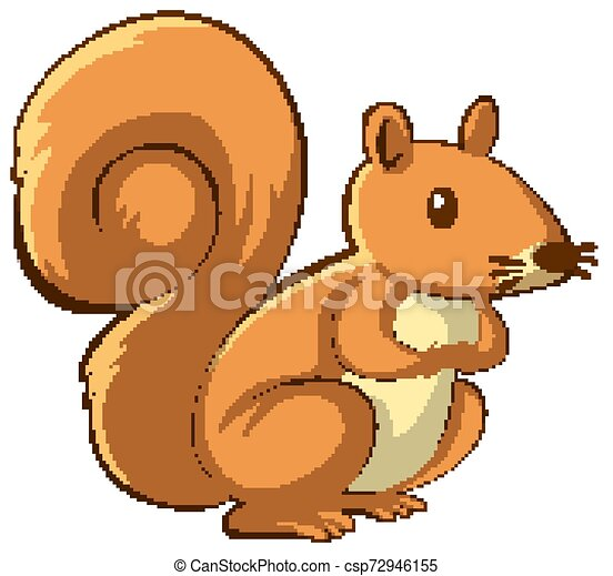 Brown squirrel on white background - csp72946155