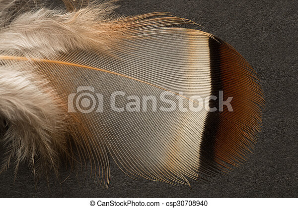 Brown textured feather close up - csp30708940