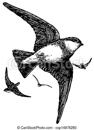brown-throated, 鳥, 砂, イワツバメ - csp14976280