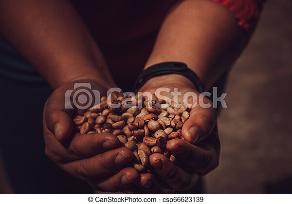 Unroasted Coffee Beans >> Brown Unroasted Coffee Beans On Hand